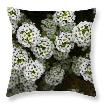 Sweet Alyssum Throw Pillow