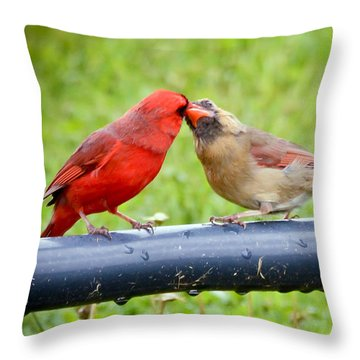 Sweet Cardinal Couple Throw Pillow