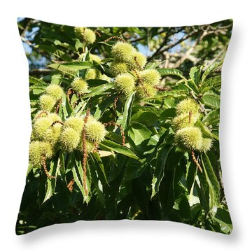 Throw Pillow featuring the photograph Sweet Chestnut by Christian Zesewitz