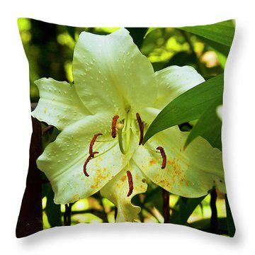 Sweet Light Throw Pillow by Kat Besthorn