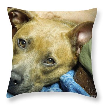 Sweet Pit Bull . Face Of Love Throw Pillow
