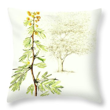 Throw Pillow featuring the painting Sweet Thorn Botanical Illustration by Heidi Kriel
