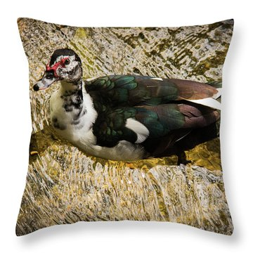 Swimming In Gold Wildlife Art By Kaylyn Franks Throw Pillow