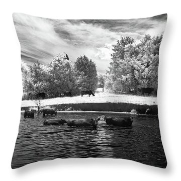 Swimming With Cows II Throw Pillow