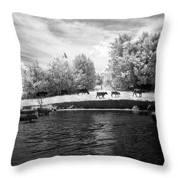 Swimming With Cows Throw Pillow