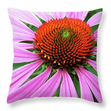 Swirling Purple Cone Flower 3576 H_2 Throw Pillow