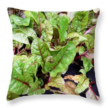 Swiss Chard In A Vegetable Garden 1 Throw Pillow