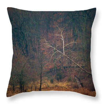 Throw Pillow featuring the photograph Sycamore Inclination by Jeff Phillippi