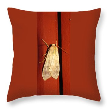 Sycamore Tussock Moth Throw Pillow