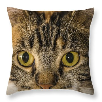 Symmetrical Cat Throw Pillow