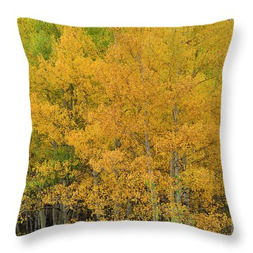 Throw Pillow featuring the photograph Symphony In Gold by Ron Cline