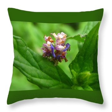 Synchlora Aerata Caterpillar Throw Pillow