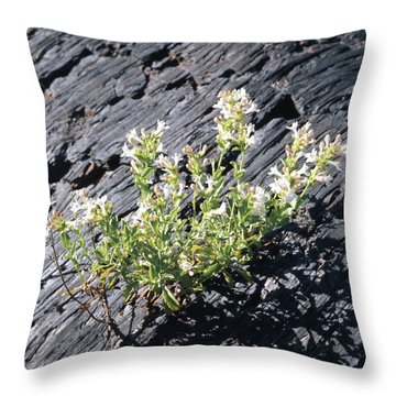 T-107709 Hot Rock Penstemon Throw Pillow