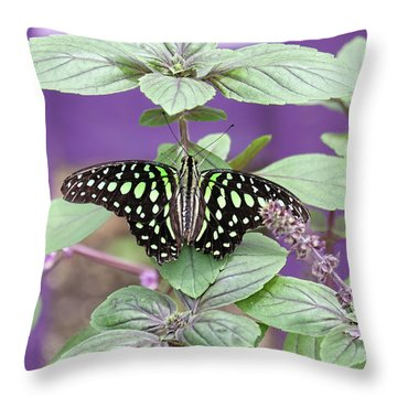 Tailed Jay Butterfly In Puple Throw Pillow