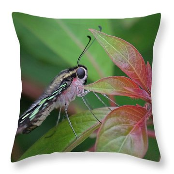Tailed Jay Butterfly Macro Shot Throw Pillow
