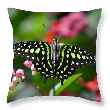 Tailed Jay4 Throw Pillow