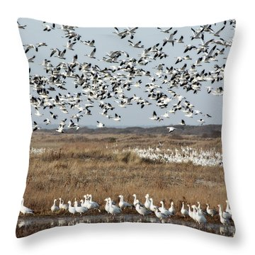 Take Flight 1 Throw Pillow