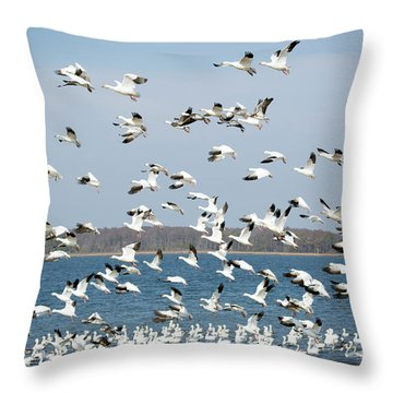 Taking Flight IIi Throw Pillow