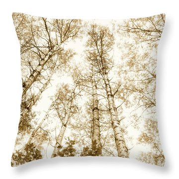 Throw Pillow featuring the photograph Tall Aspens by Elena Elisseeva