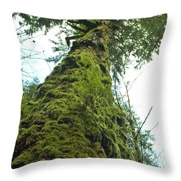 Tall Tall Tree Throw Pillow