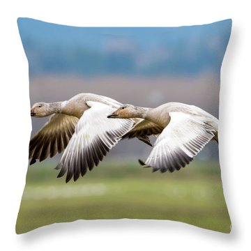 Throw Pillow featuring the photograph Tandem Glide by Mike Dawson