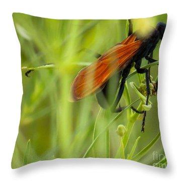 Tarantula Hawk 1 Throw Pillow