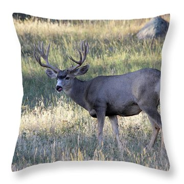 Throw Pillow featuring the photograph Tasty by Shane Bechler
