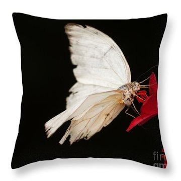 Tattered And Beautiful Throw Pillow
