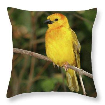 Taveta Golden Weaver #2 Throw Pillow