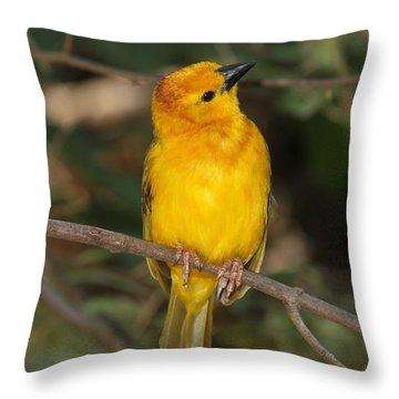 Taveta Golden Weaver Throw Pillow