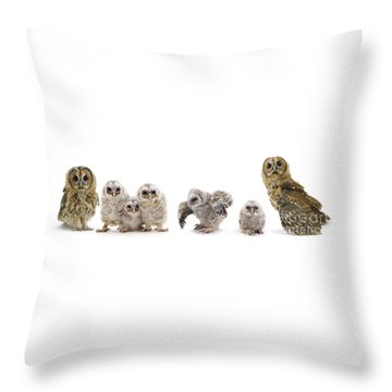 Tawny Owl Family Throw Pillow
