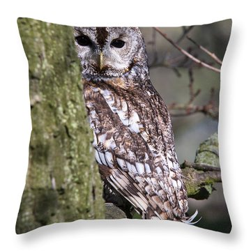 Tawny Owl In A Woodland Throw Pillow