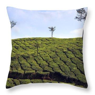 Tea Planation In Kerala - India Throw Pillow