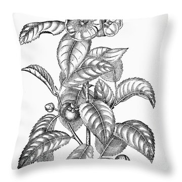 Tea Plant, 19th Century Throw Pillow by Granger