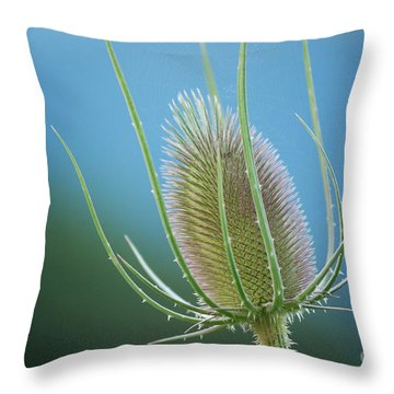 Teasel Sky Throw Pillow