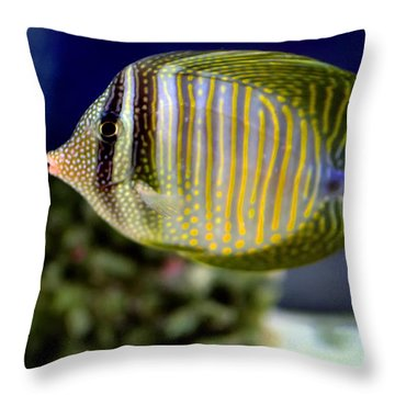 Technicolor Fish Throw Pillow by Madeline Ellis