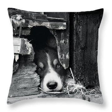 Working Border Collie Dog. Throw Pillow