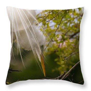Throw Pillow featuring the photograph Tending To The Nest by Kelly Marquardt