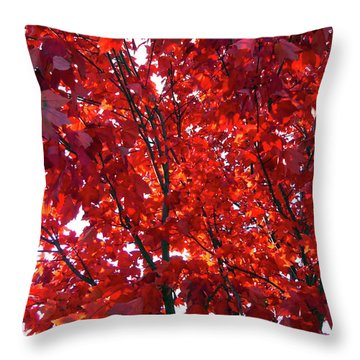 Tennessee Trees 3 Throw Pillow