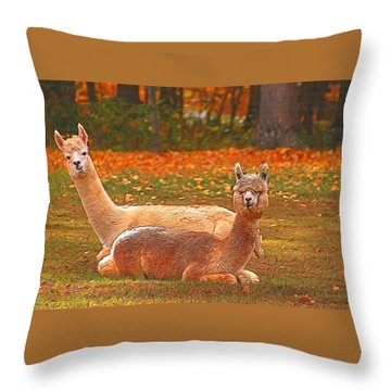 Teribus And Major Throw Pillow by Allen Beatty