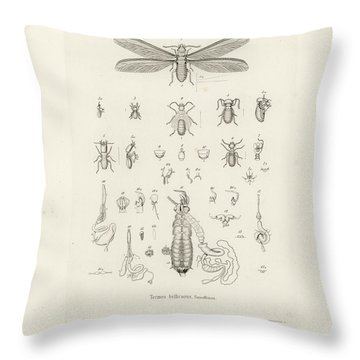Termites, Macrotermes Bellicosus Throw Pillow