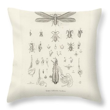 Termites, Macrotermes Bellicosus Throw Pillow