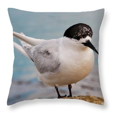 Throw Pillow featuring the photograph Tern 1 by Werner Padarin