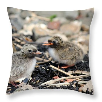 Tern Chicks Throw Pillow