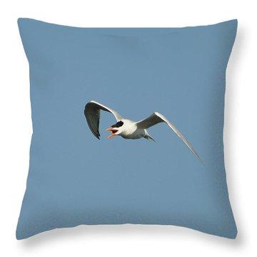 Tern Flight 02 Throw Pillow by Al Powell Photography USA
