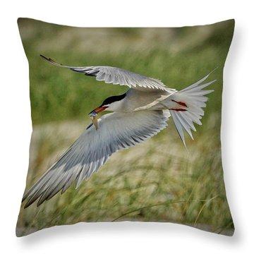 Tern Throw Pillow