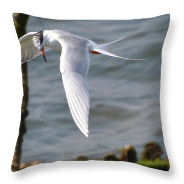 Tern Searching The Water  Throw Pillow by Dan Williams