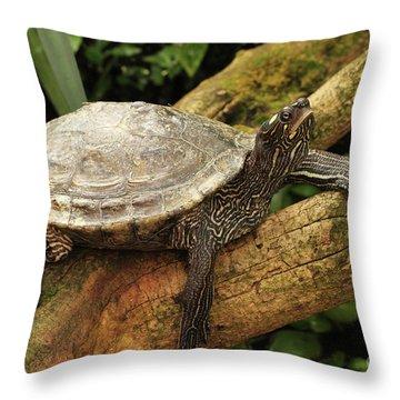 Tess The Map Turtle #3 Throw Pillow
