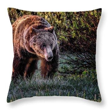 Teton Grizzly Throw Pillow