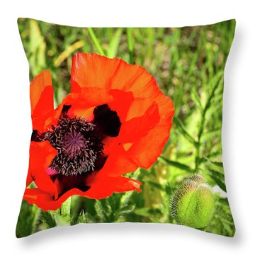 Throw Pillow featuring the photograph Teton Poppy by Greg Norrell